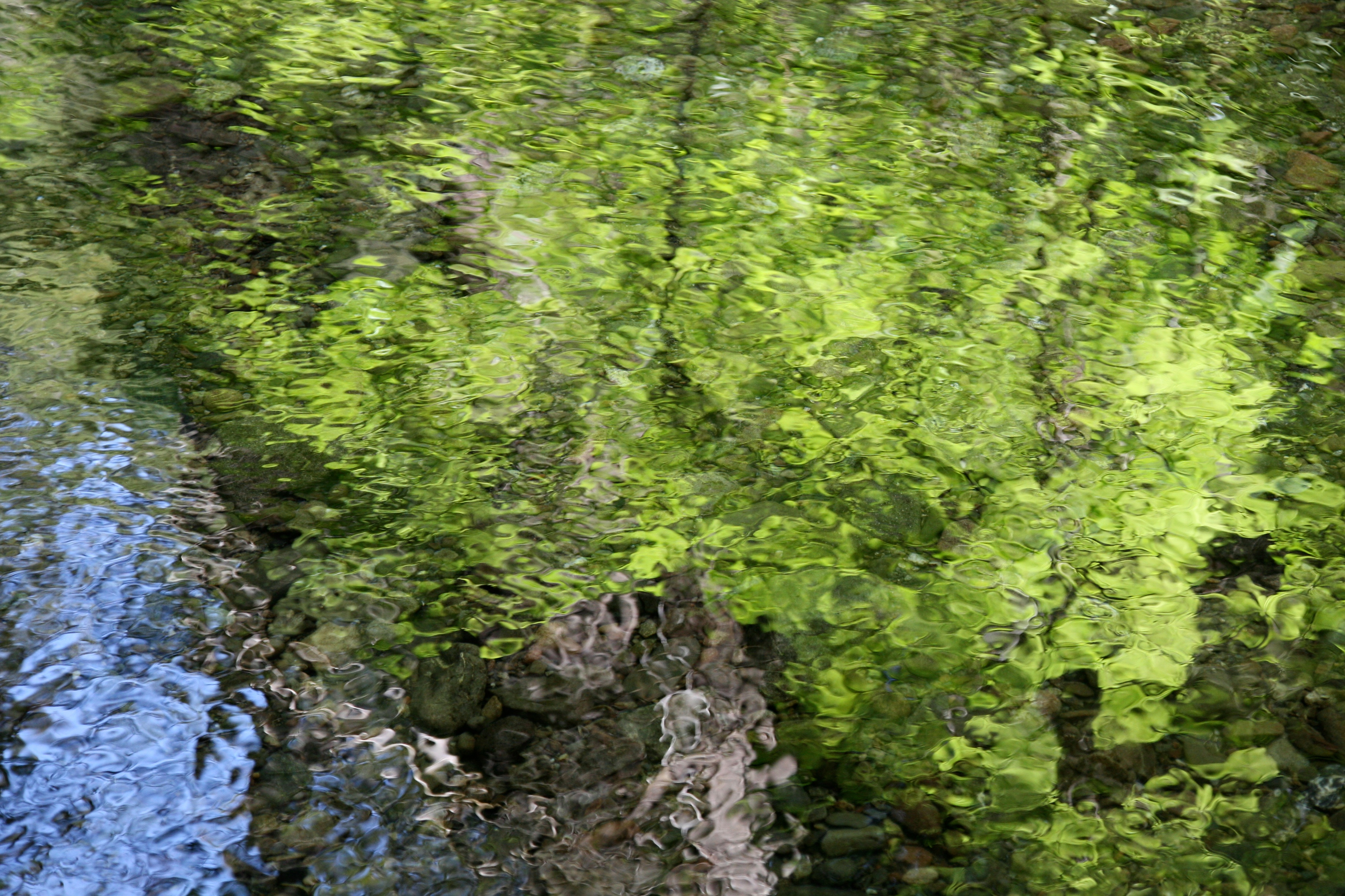 forest in reflection author lucke charlie