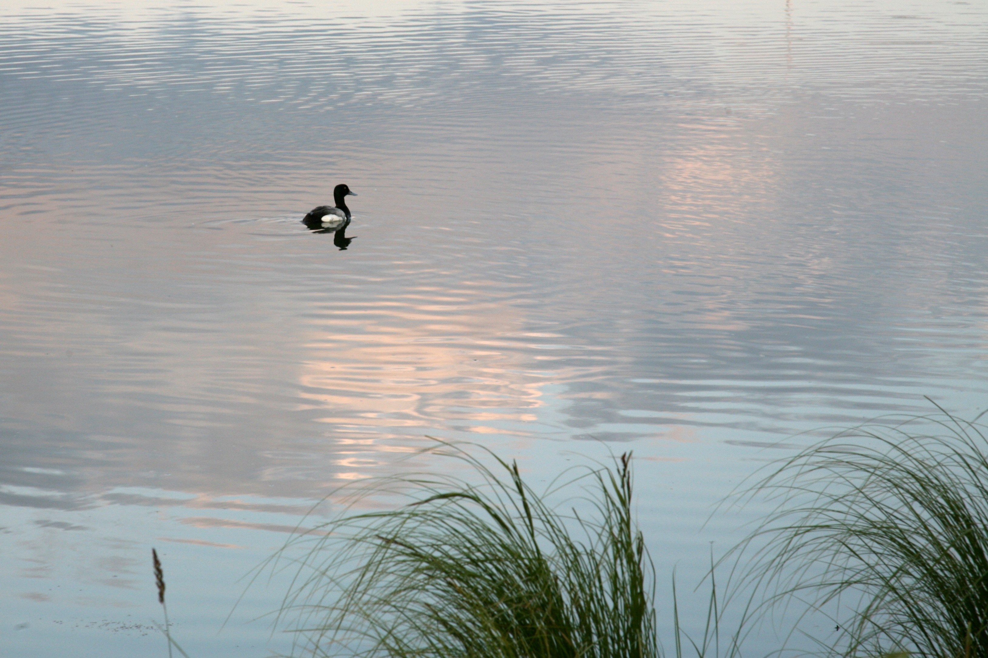 anchorage pond author lucke charlie