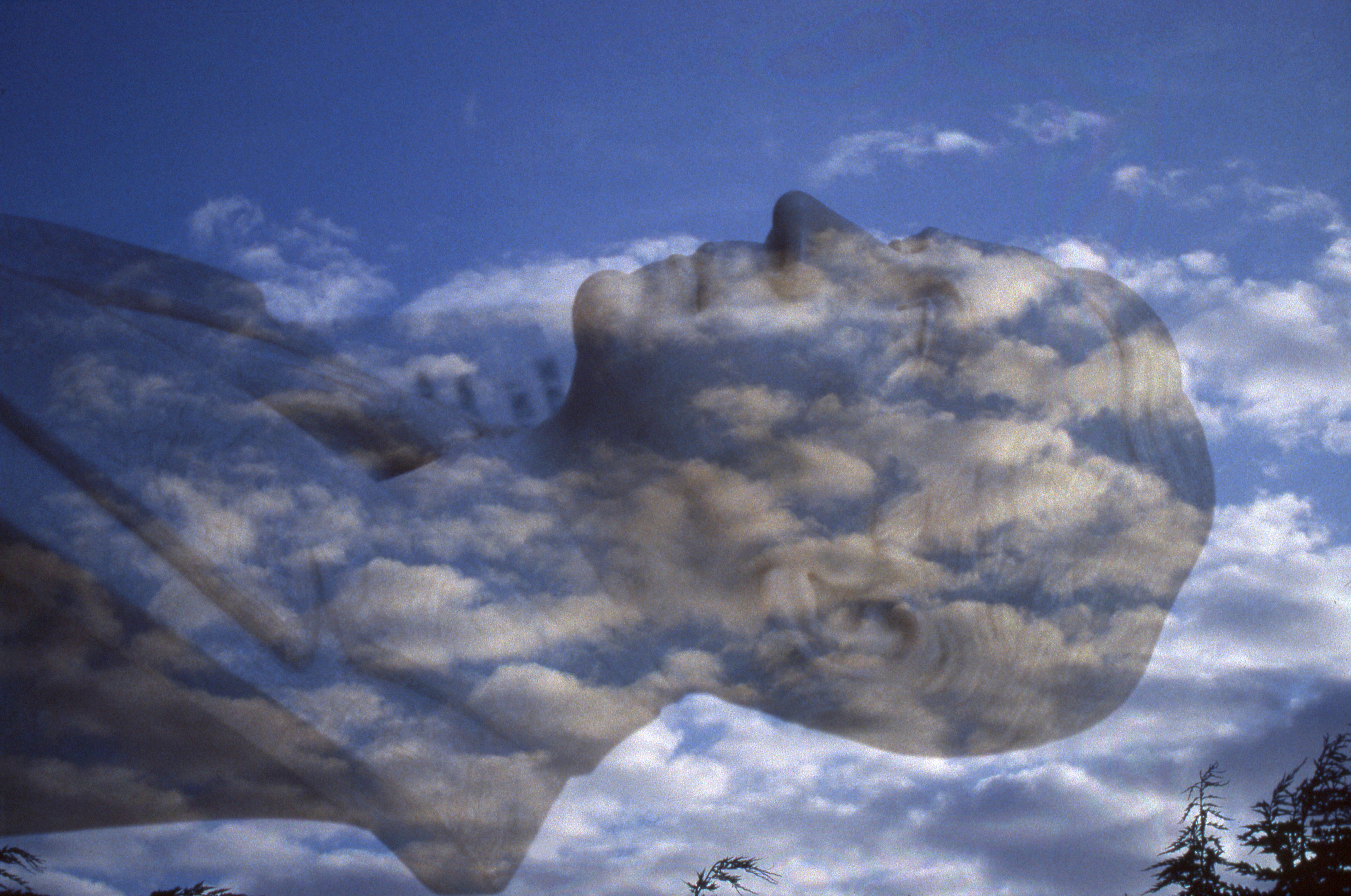 head in the clouds author lucke charlie scanned