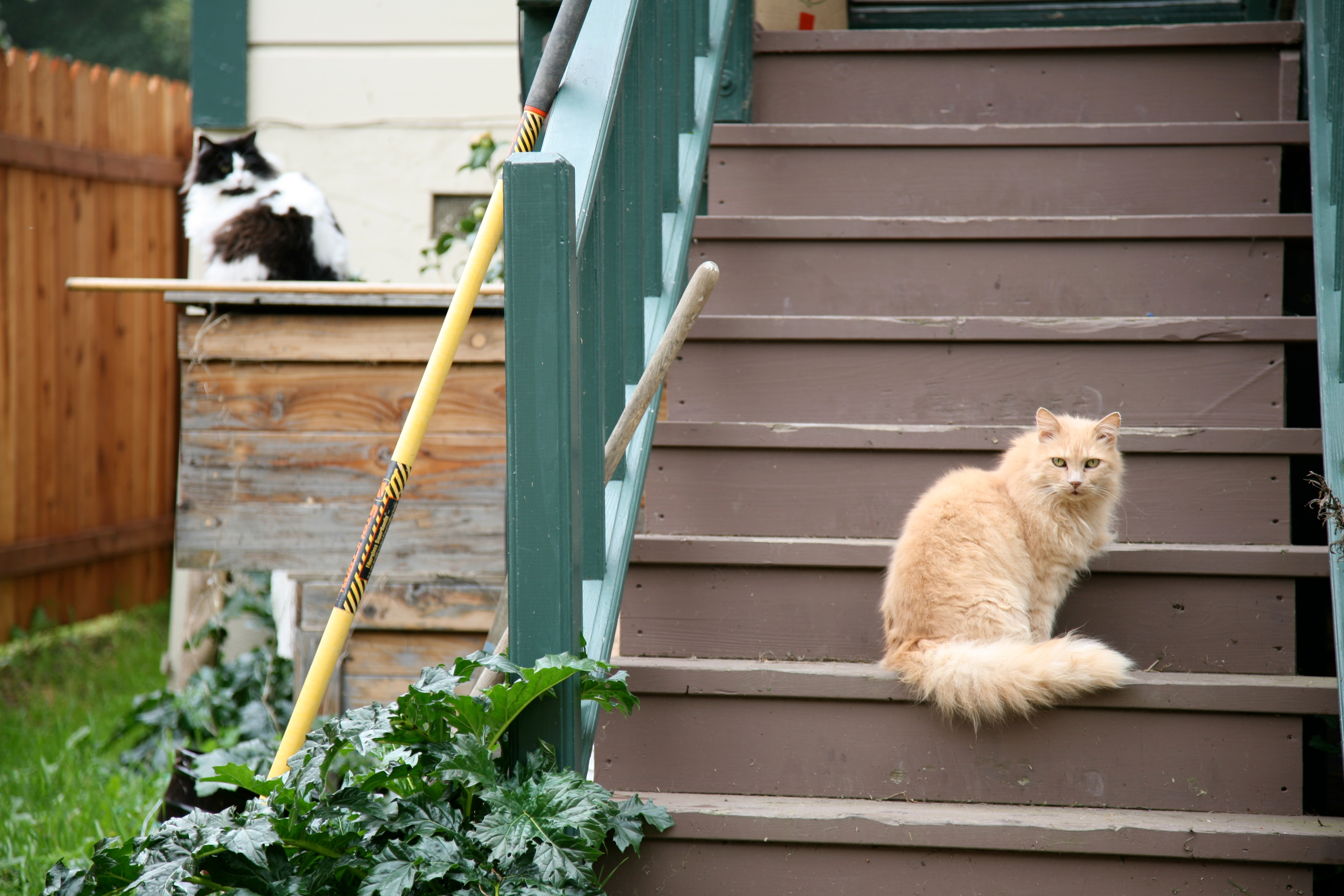 two cats staring author lucke charlie