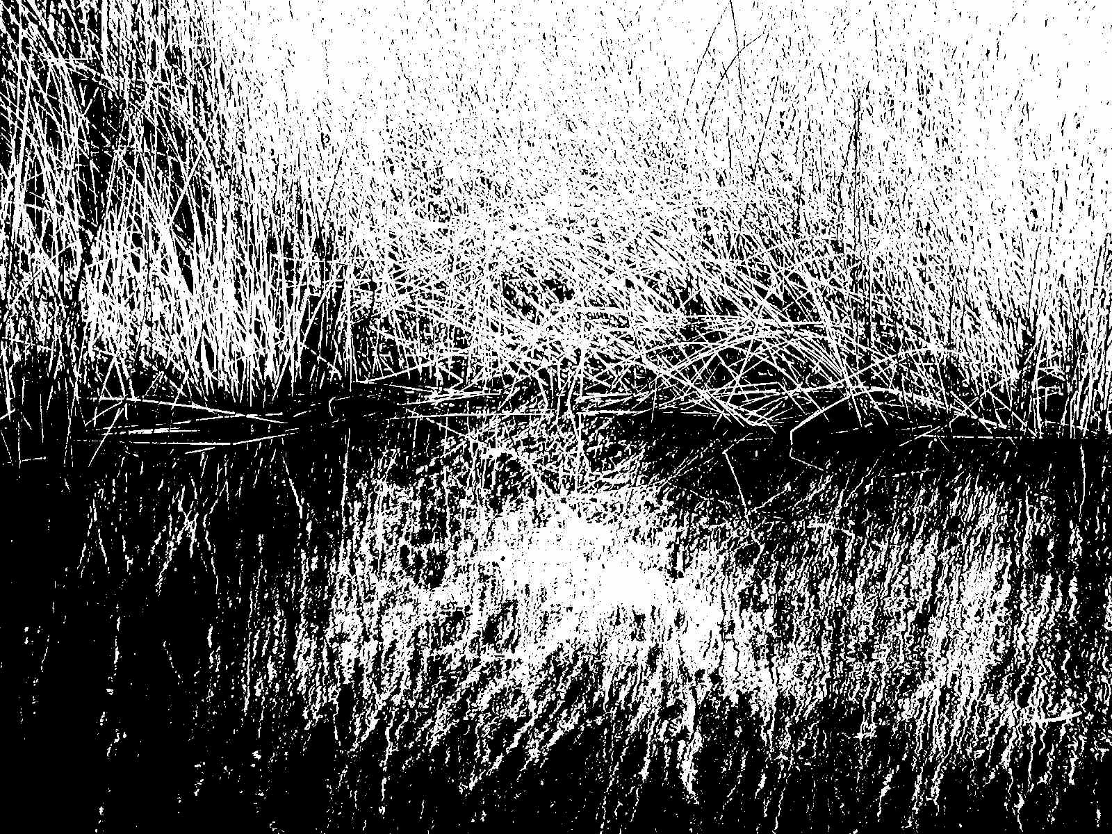 reed reflection author lucke charlie