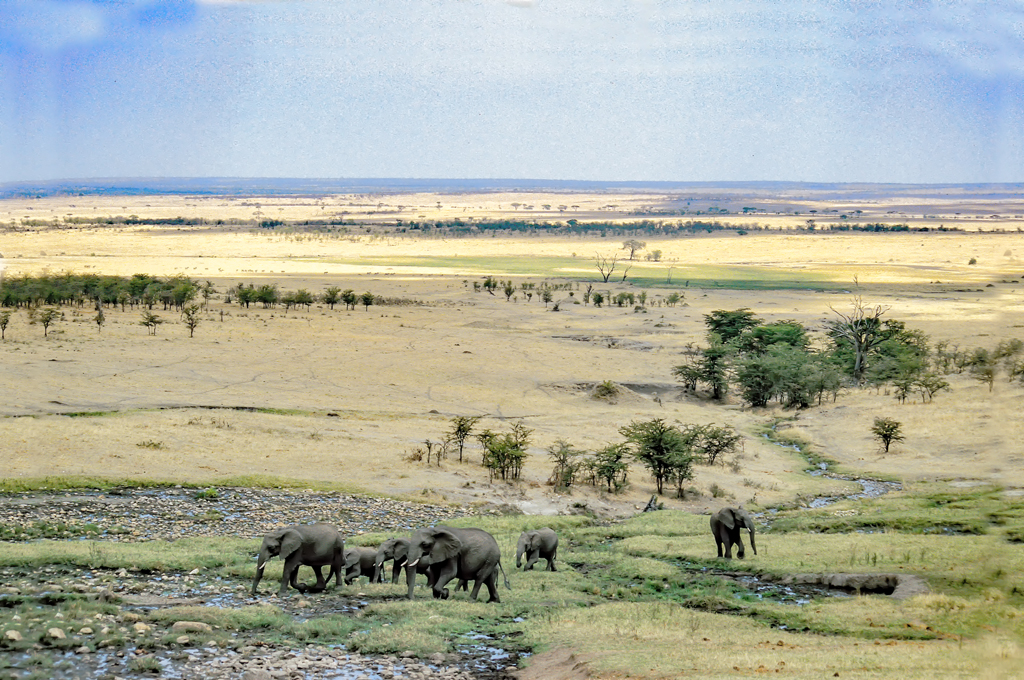 wild plains of serengeti author bloy bruce scann