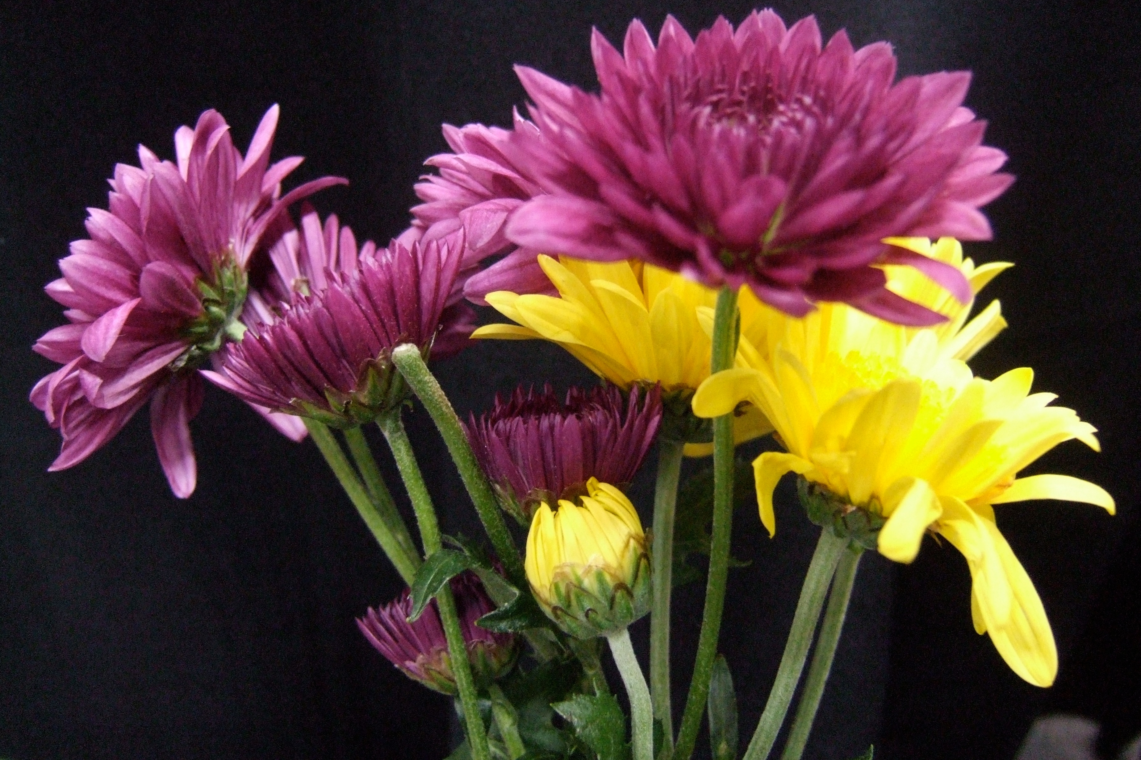 purple and yellow author lucke charlie