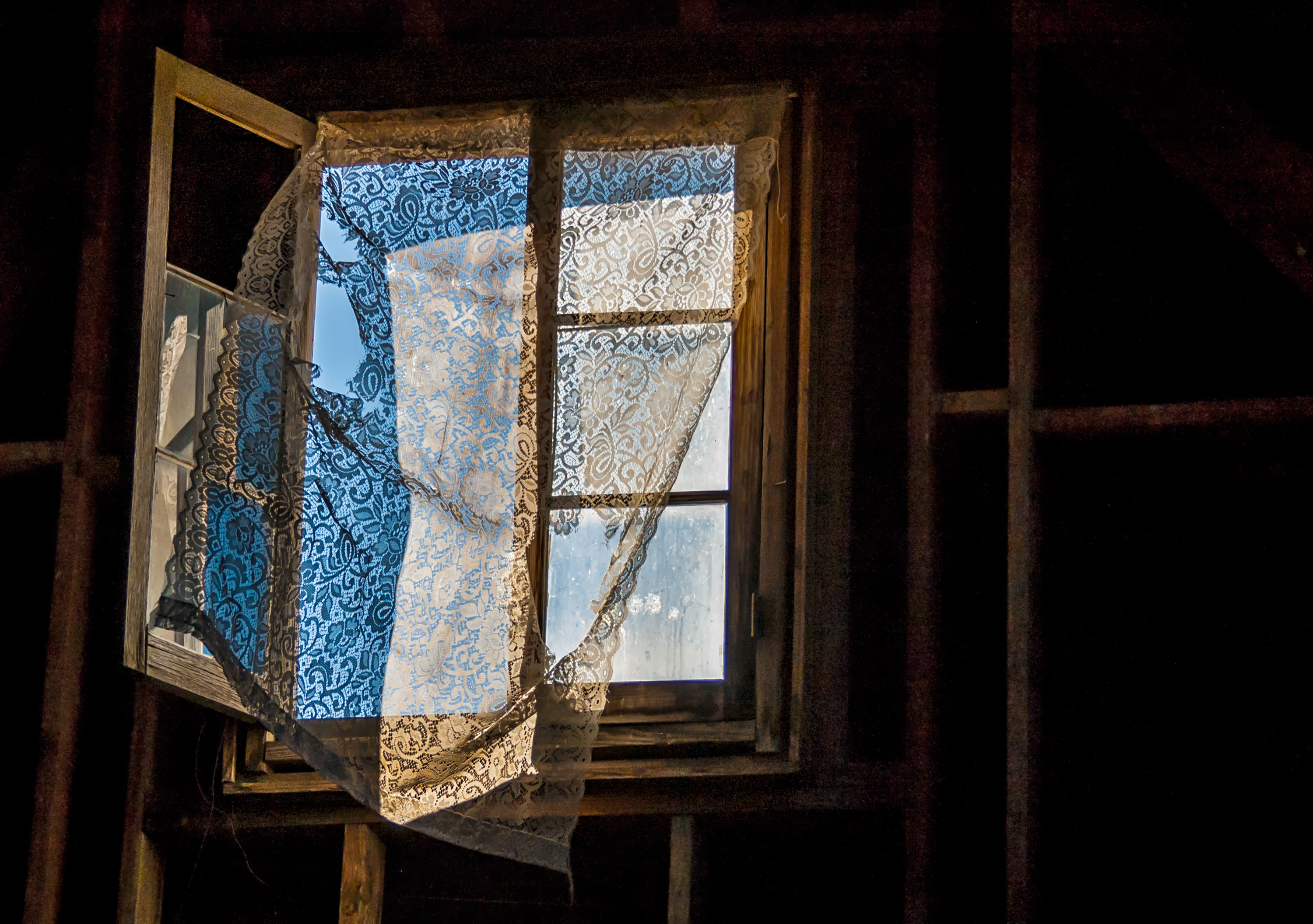 the wind in window author bloy bruce shadows