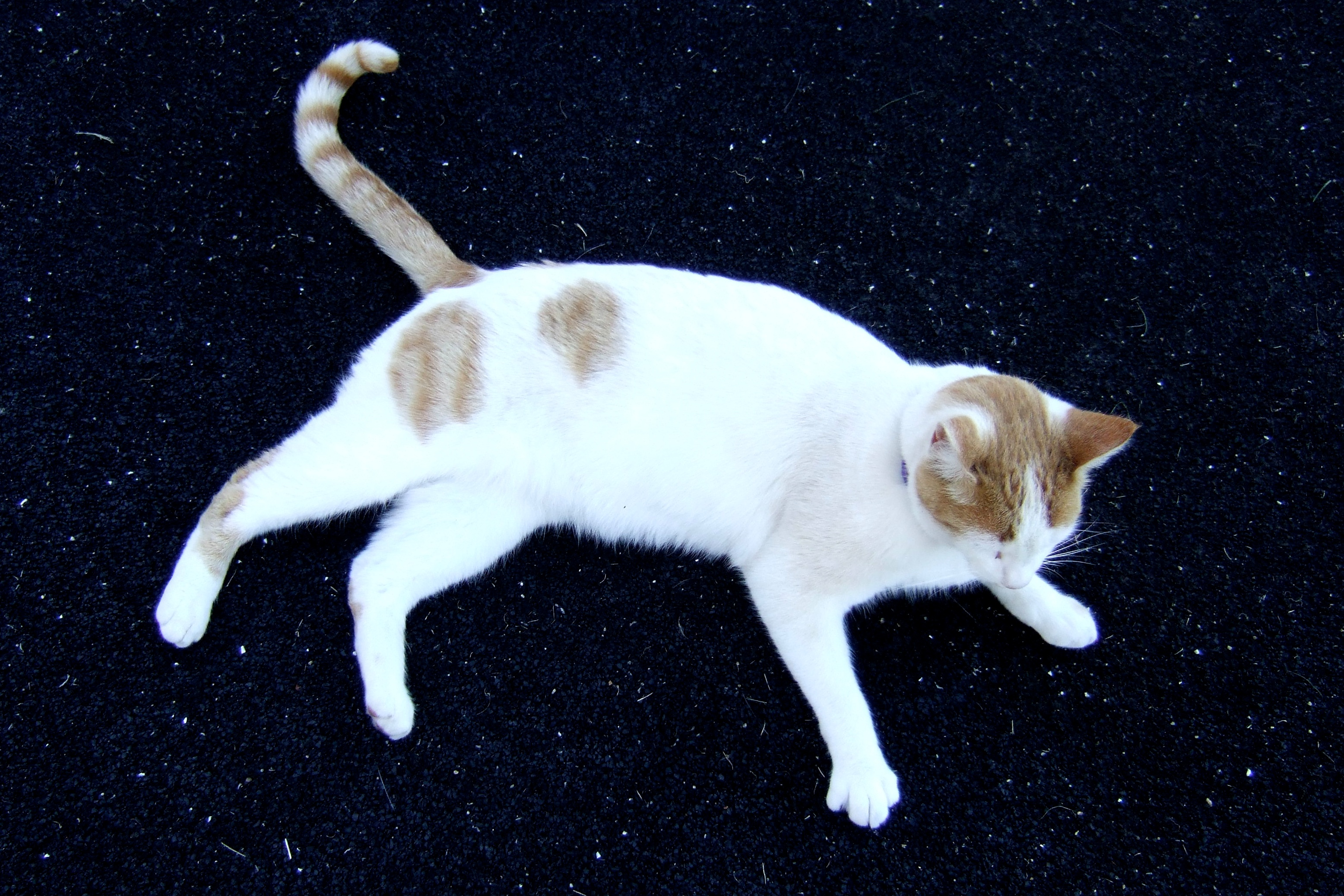 cat in a starry night author lucke charlie