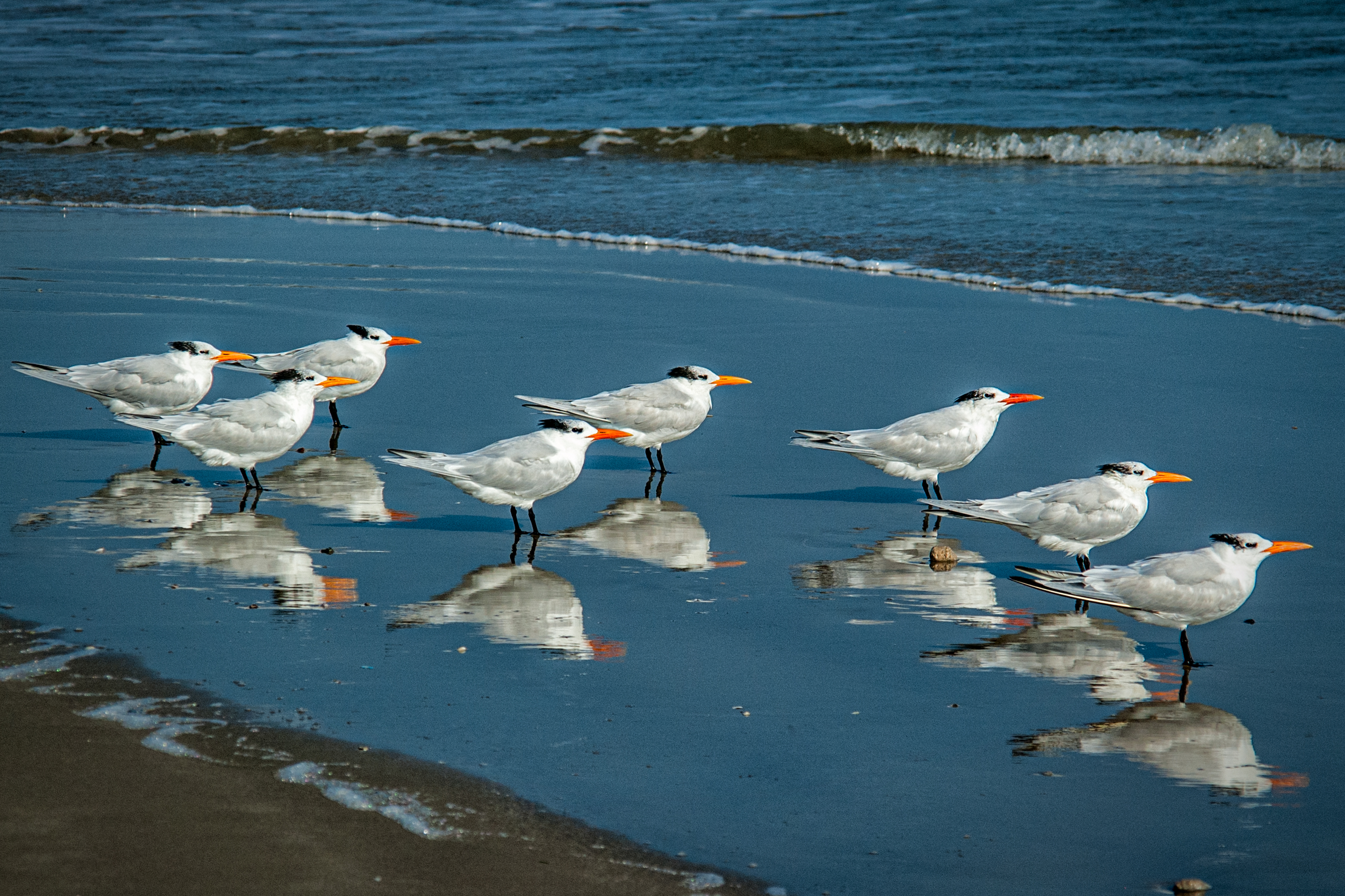 birds all in a row author bloy bruce