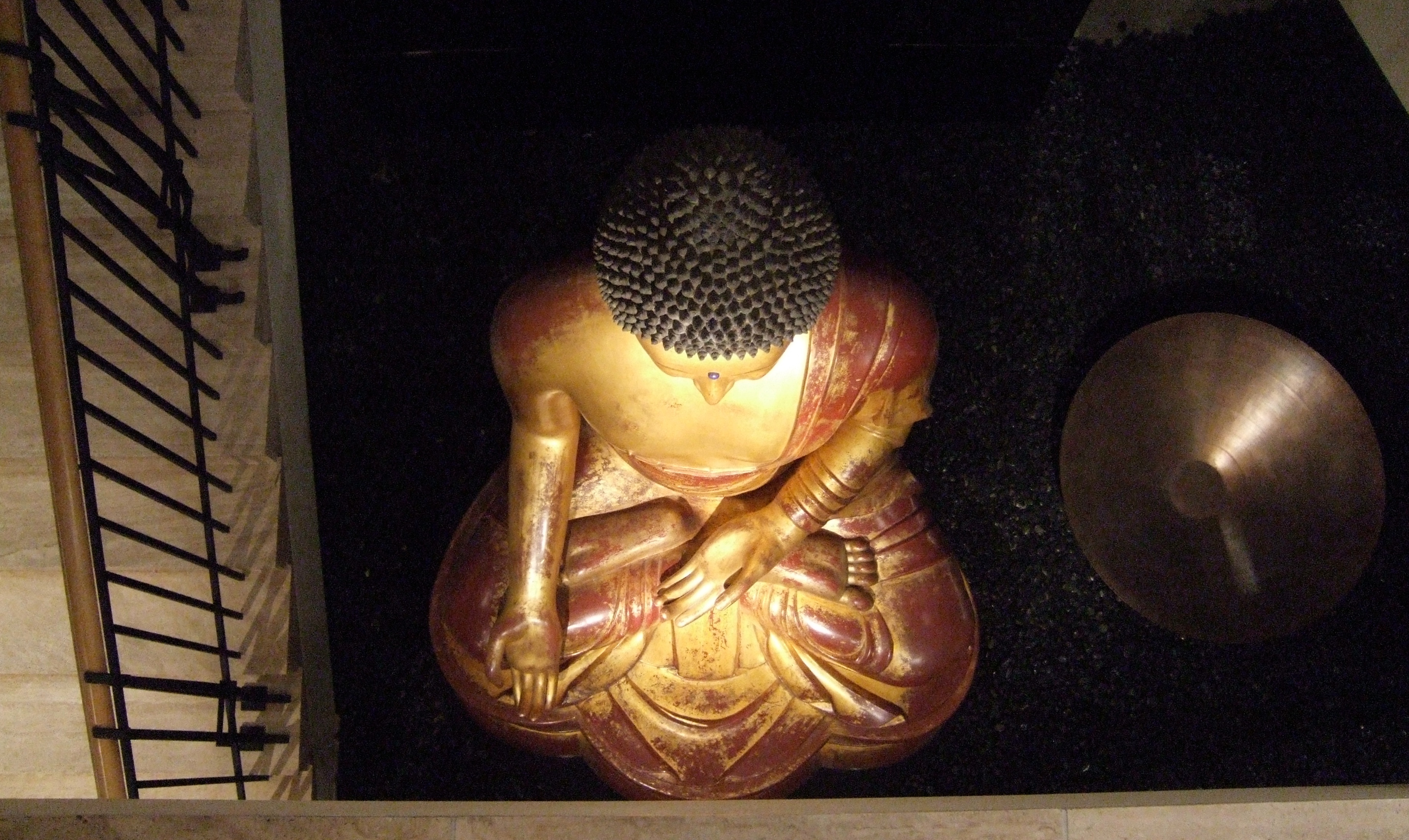 buddha from the top author lucke charlie