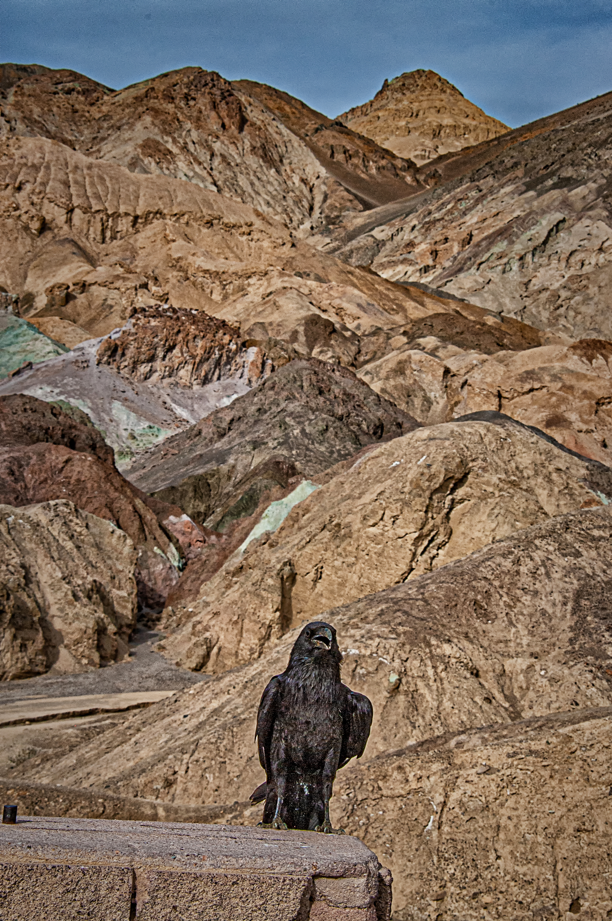 raven on a rock author bloy bruce death valley n