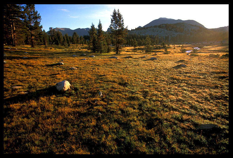 meadow near wright creek author ernst brian