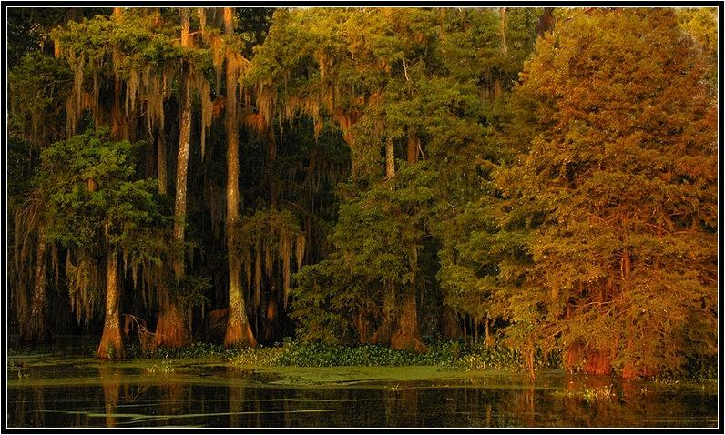 early light on cypress author gaubert ronnie
