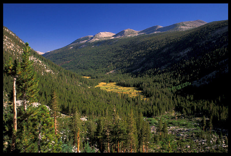 looking down on lyell fork meadow author ernst br brian