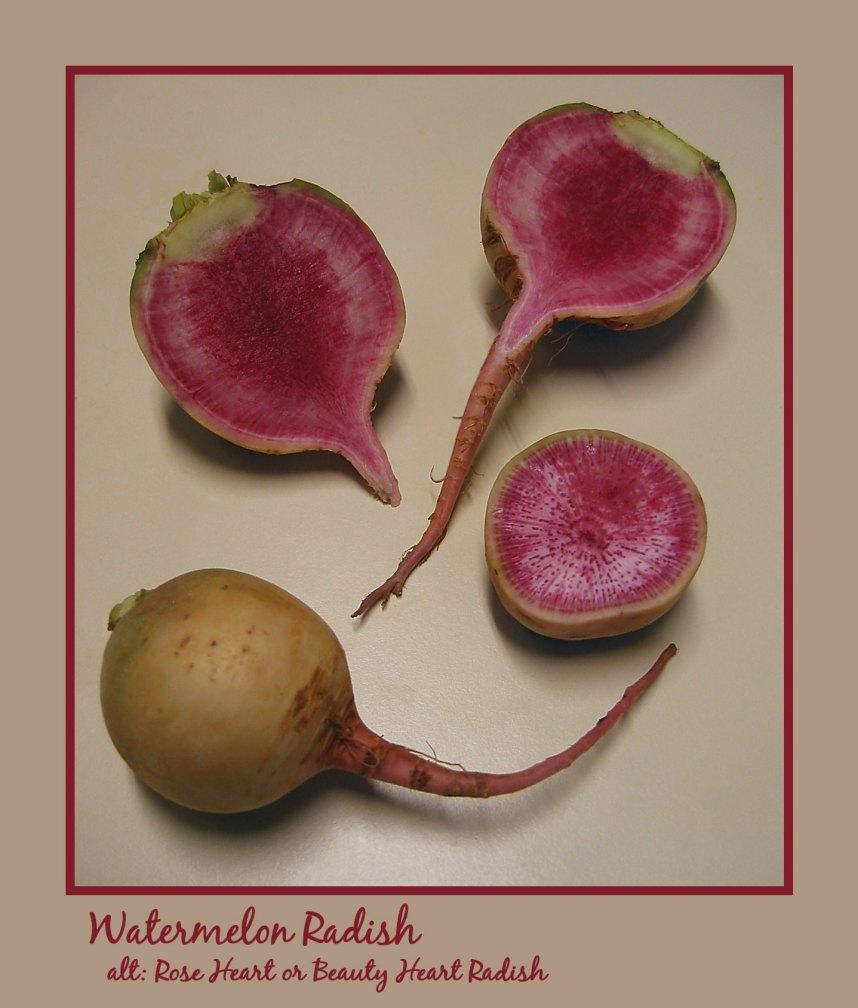 watermelon radish whole and cut in both dimensions barman dilip