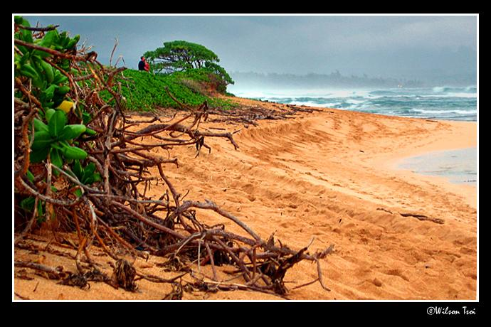 stormy afternoon at the beach author tsoi wilson