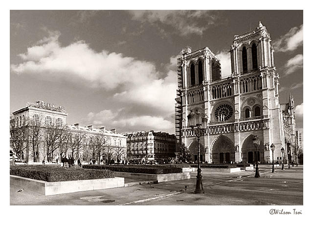 notre dame cathedral author tsoi wilson