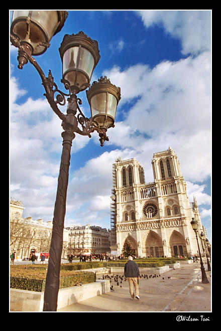 lamp post notre dame author tsoi wilson