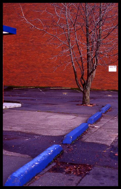 red wall blue curb author patterson steve