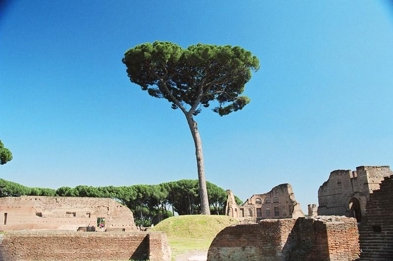 a tree on palatine hill author ilnyckyj milan