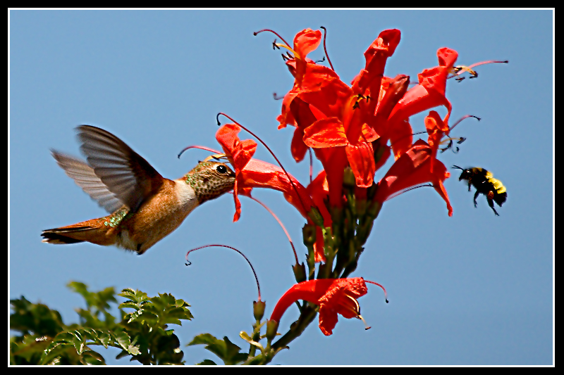 sharing flowers for all photo net members author brandan hector