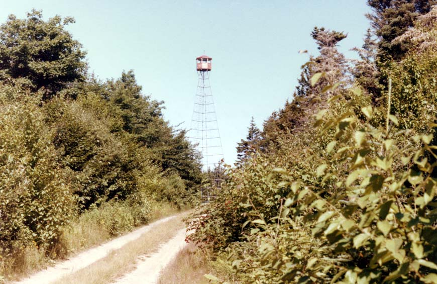 fire tower is also a survey author brooks d david
