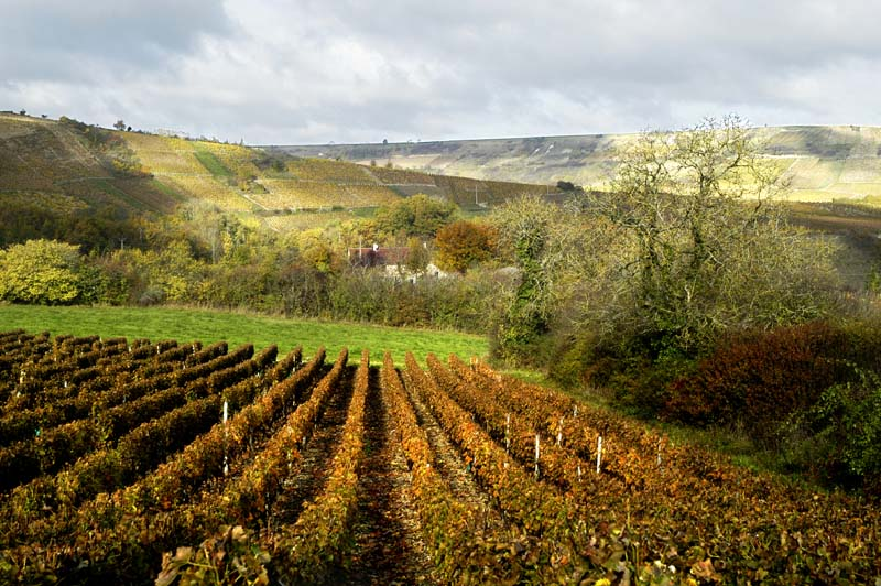 wineyard in sancerrois author dupin eric