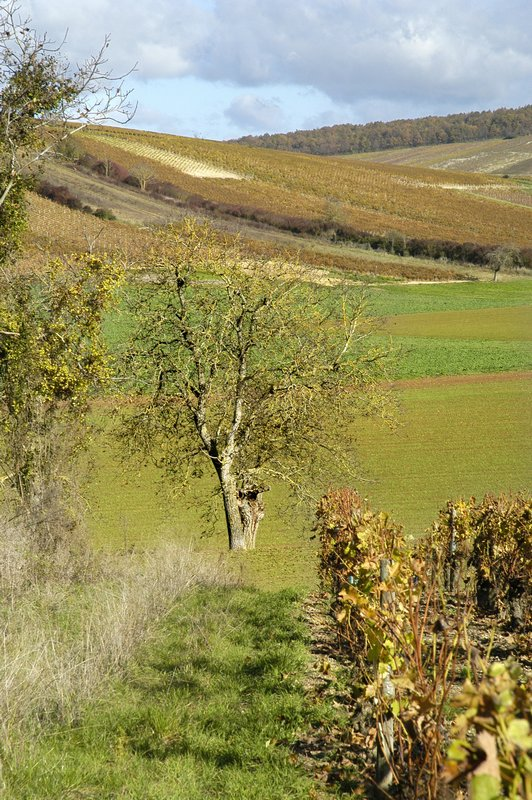 tree field and wineyard author dupin eric