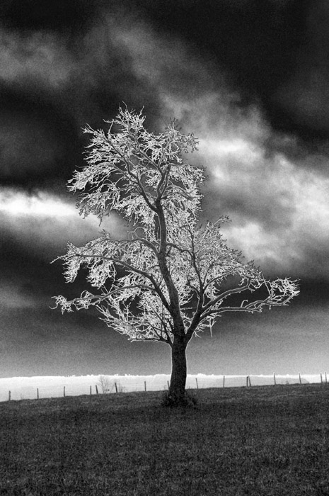 lonesome tree author dupin eric