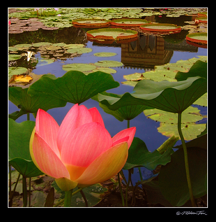 in the pond author tsoi wilson