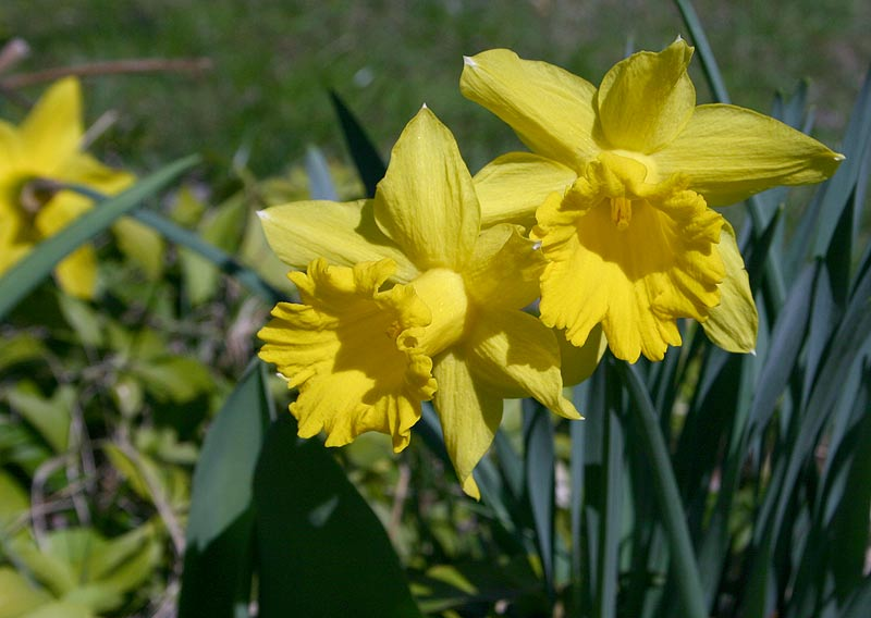 there is something about spring author gordley j james