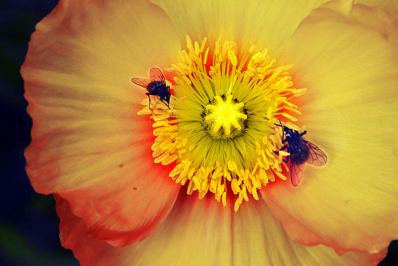 insects on flower author dupin eric