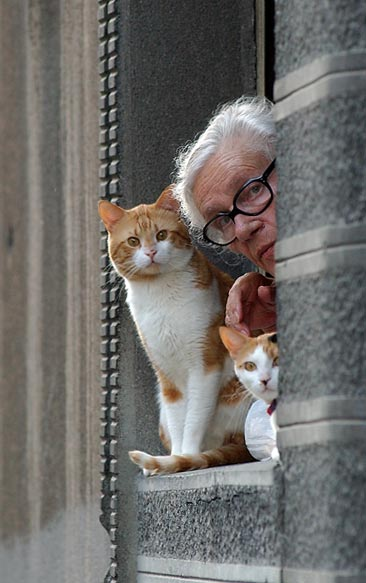 granny and cats author m vlad