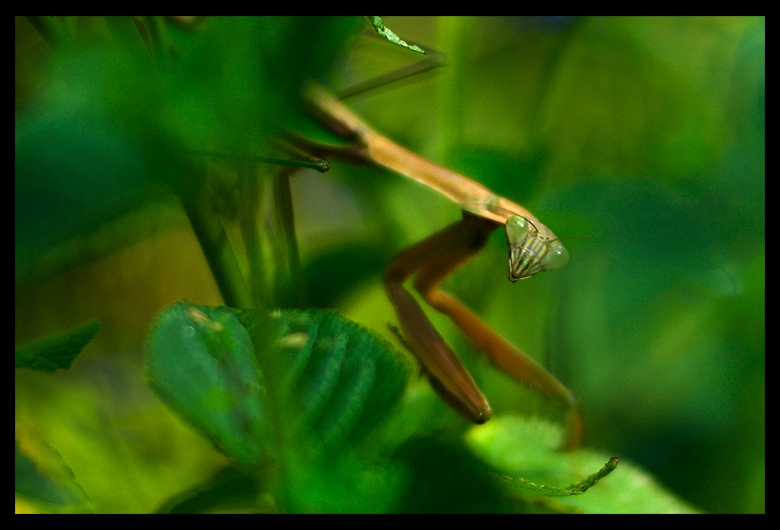 praying mantis author walker clay