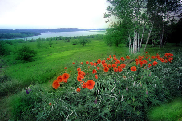 view with poppies author vanourkova jana