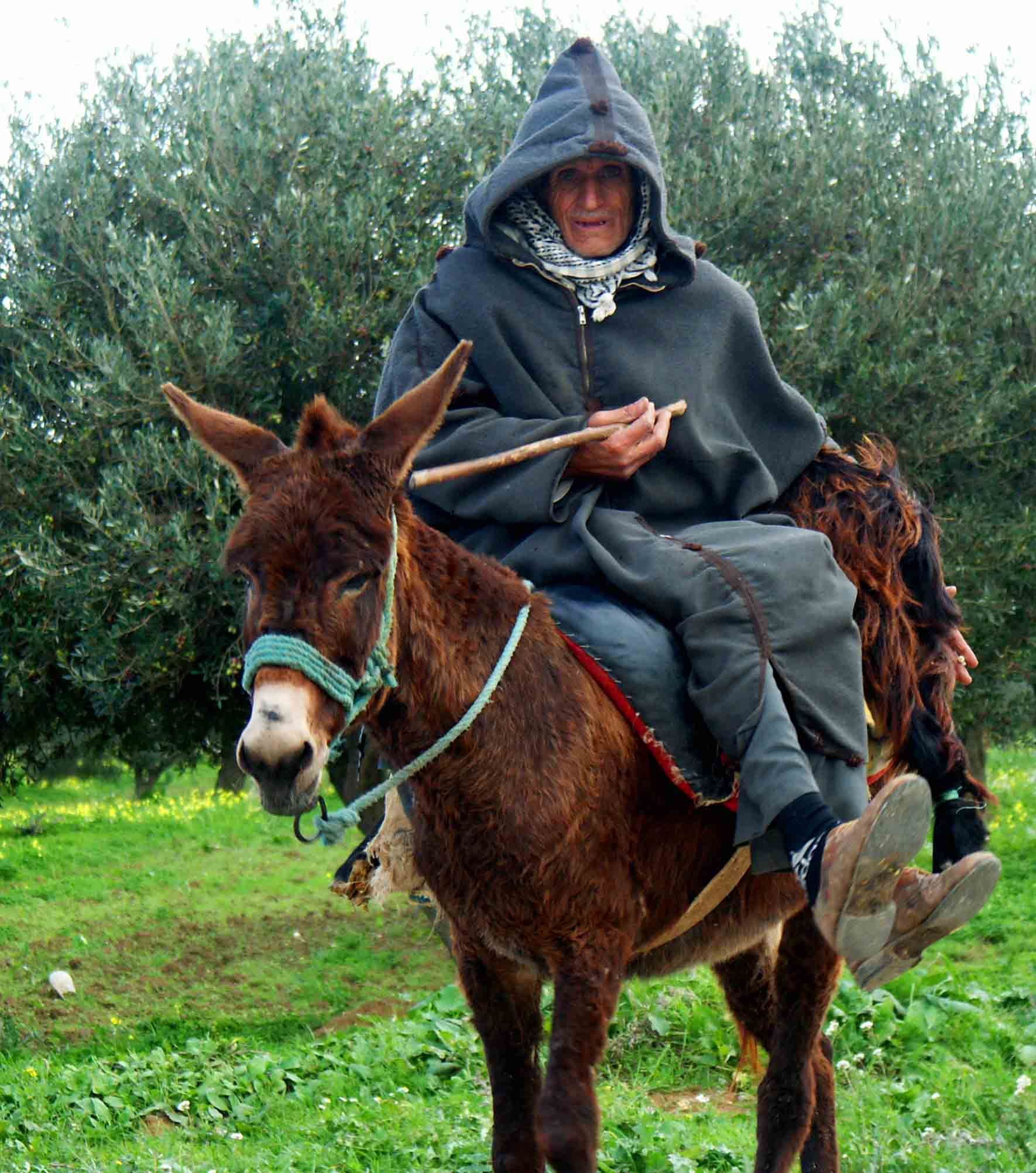 tunisian gentleman riding to town author downs j jim