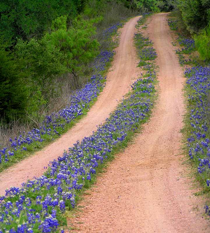 road to bluebonnet heaven author downs jim