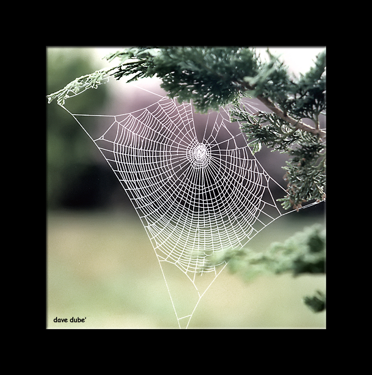 morning web revisited author dube dave