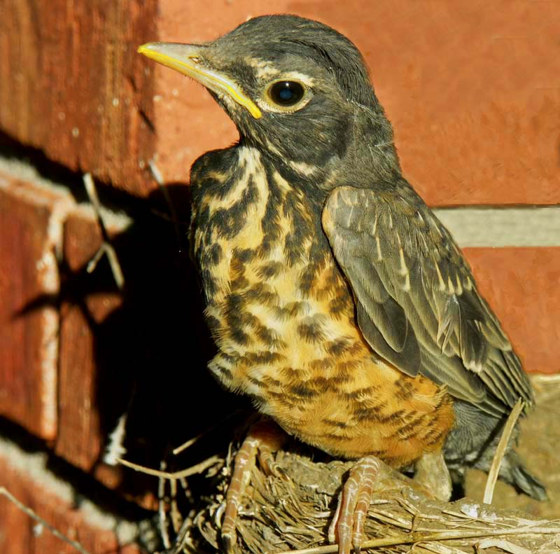robin chick contemplating first flight author dow downs jim