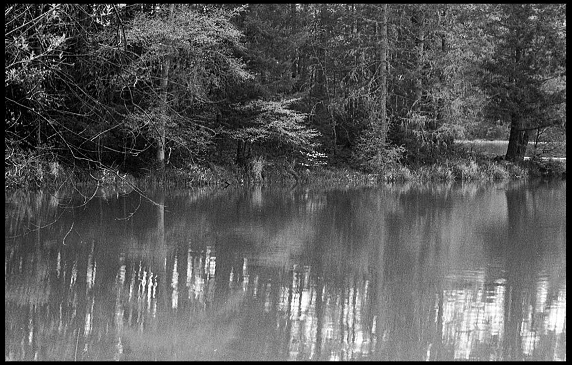 trees on water author patterson steve