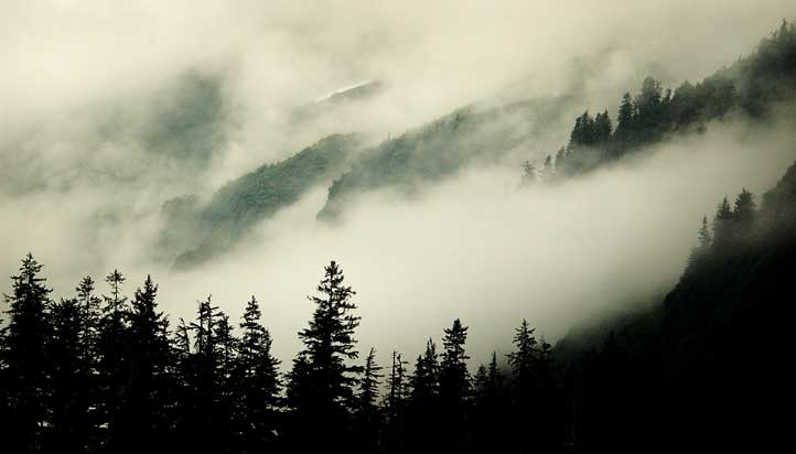 fog on the mountians author mckenzie dennis