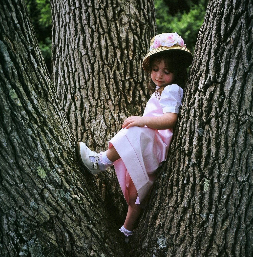 reflecting about life in a tree author trunfio pa paul