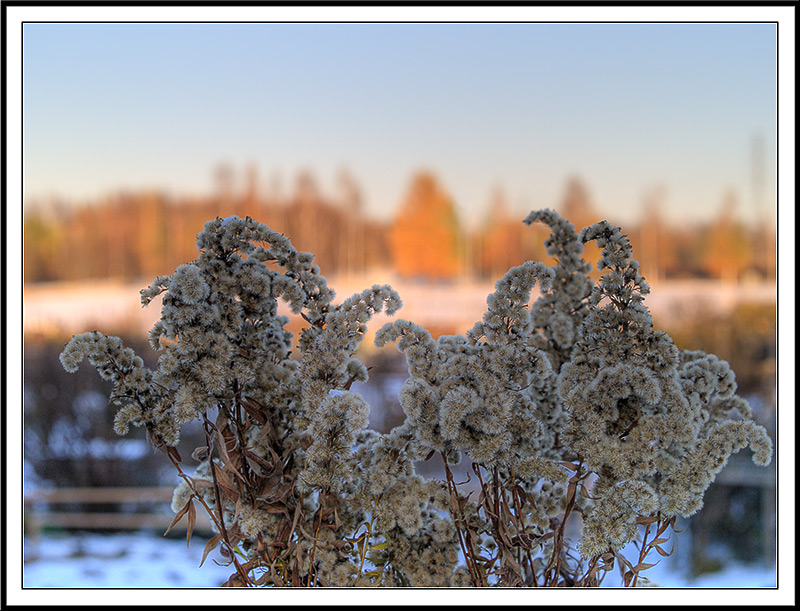 winter flowers author oly fe