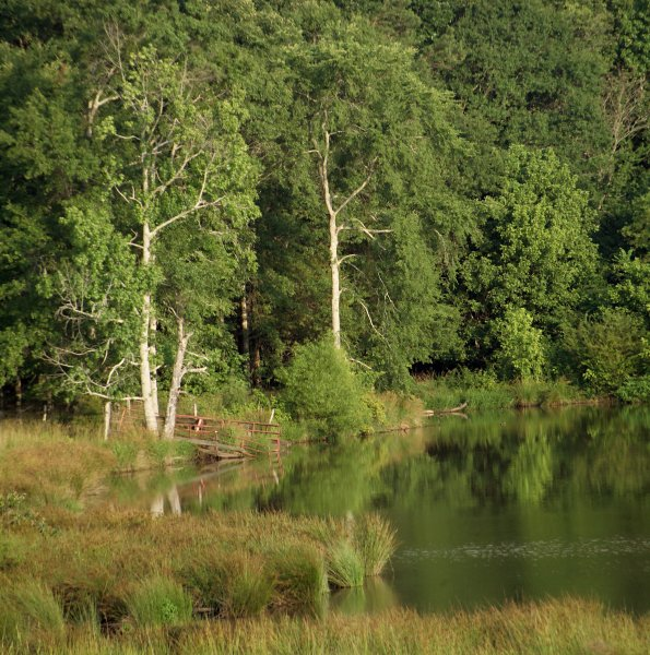 trees and pond author kelly landrum