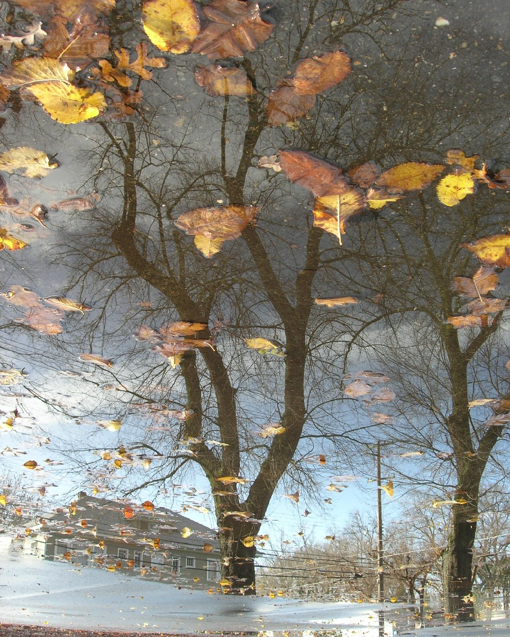tree reflection with yellow leaves author dreizle dreizler bob