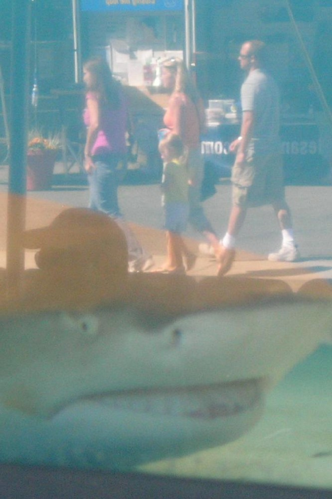 shark eying tourists author dreizler bob