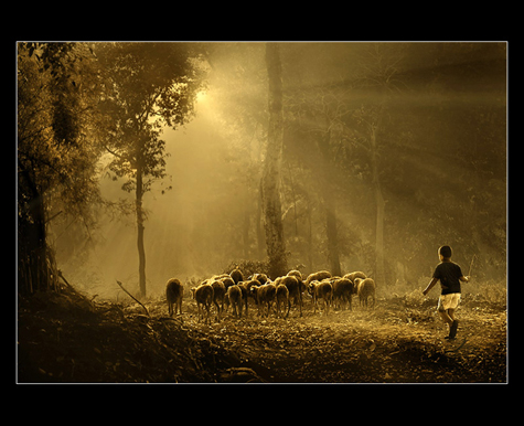boy sherpant withs sheeps in ray of light author prakarsa rarindra