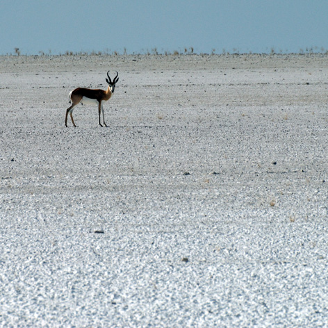 in the safety of salt pan author vanourkova j jana