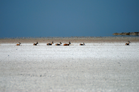high noon in etosha author vanourkova jana