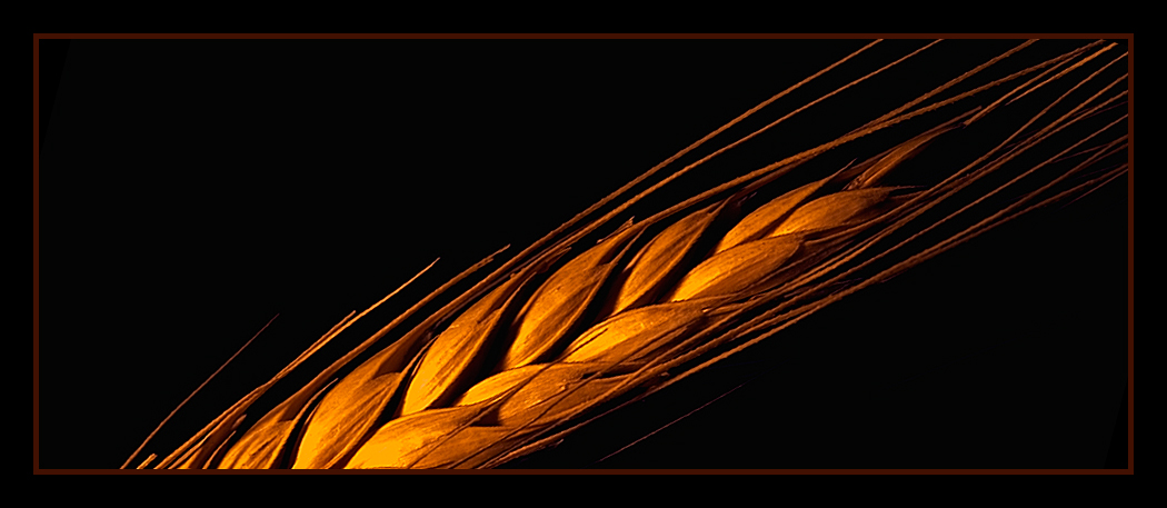 wheat in the best light author dube dave