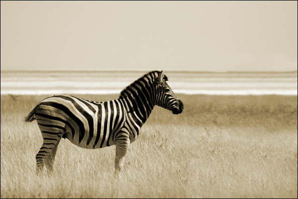 etosha s striped beauty author vanourkova jana