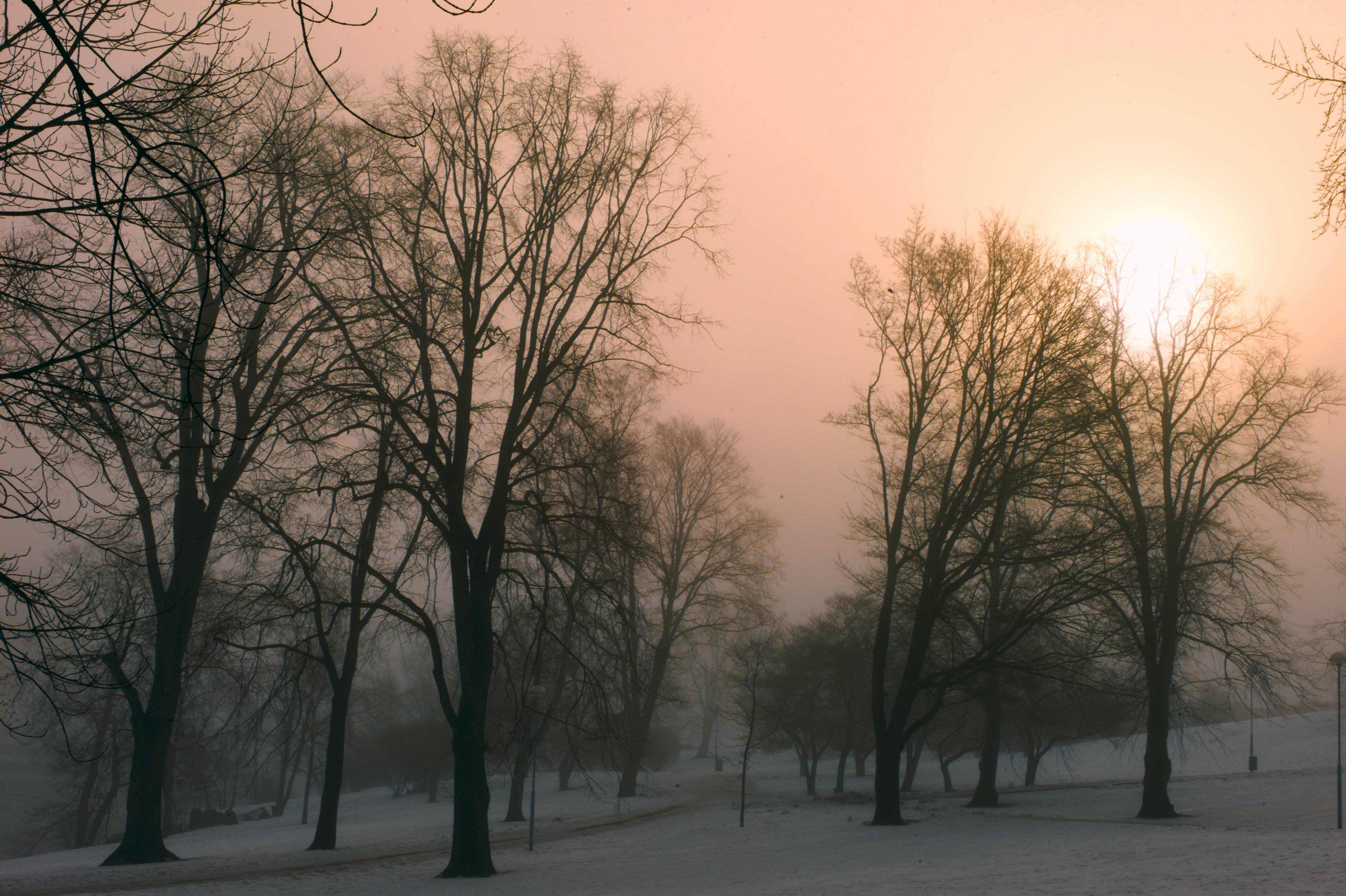 dense fog view also larger covered park author so soini hannu