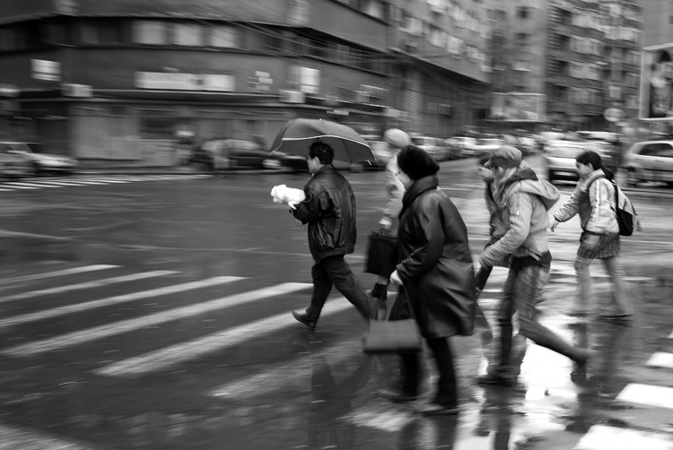 rainy bucharest and people dogs some degre ursu mihail
